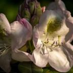 Blüten im Licht (1 von 1)