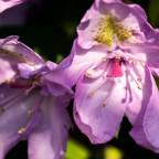 Blüten im Licht 2 (1 von 1)