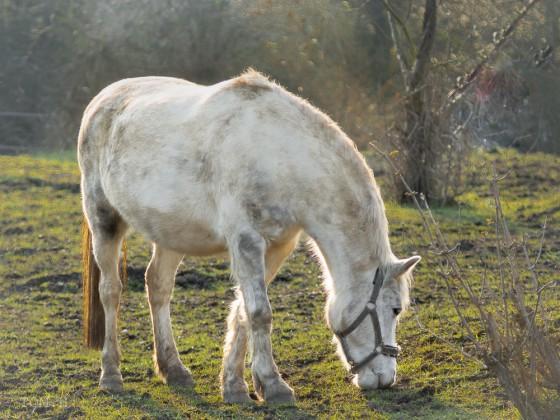 Pferdchen im Nostalgielook