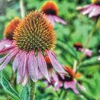 Blume3 HDR