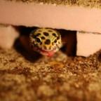 Exotische Reptilien