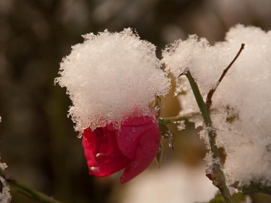 erster Schnee 02 (1 von 1)