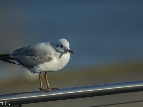 Vogel auf der Stange