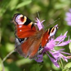 Mein Schmetterling