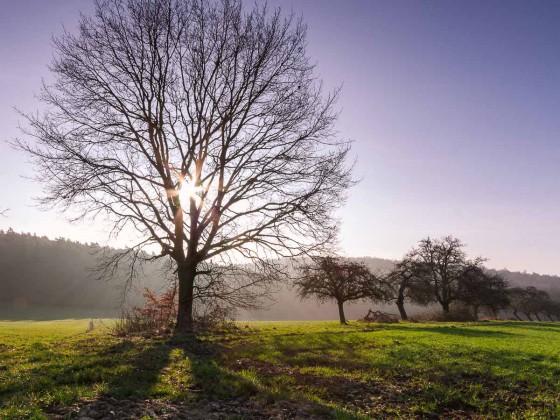 Baum_Gegenlicht_Forum1-1